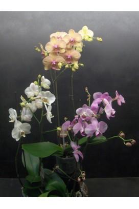 Plant in pot 2